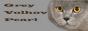 Питомник британских кошек Grey Volhov Pearl